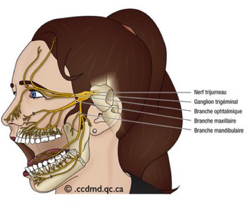 L'ostéopathie rend la mobilité aux muscles et structures entourant le nerf Trijumeau, limitant ainsi l'apparition des symptômes