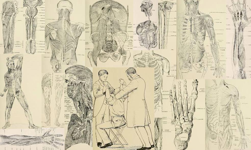 L'ostéopathie est instituée depuis longtemps chez les anglo-saxons