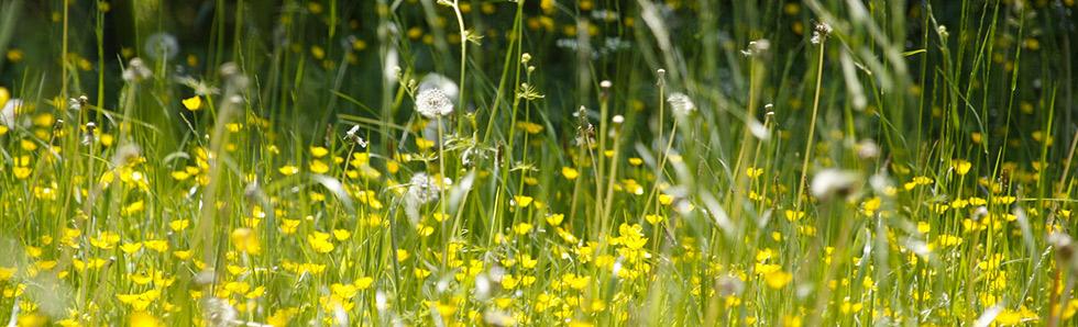 Le printemps mais également l'été et l'automne sont propices aux allergies