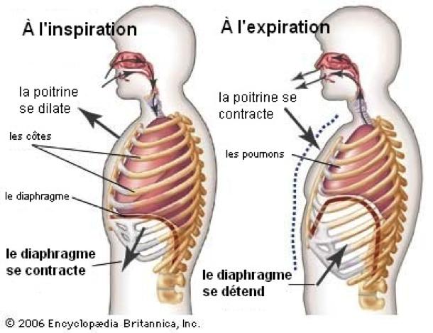 Apprendre à bien respirer est important pour le bien-être général du corps humain
