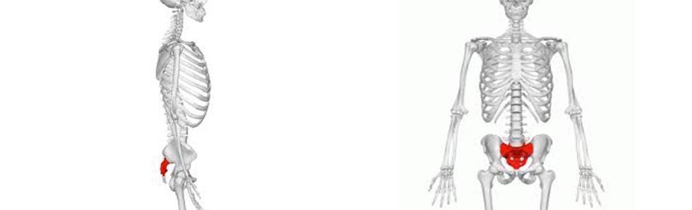 Le sacrum est l'un des os les plus importants du corps humain