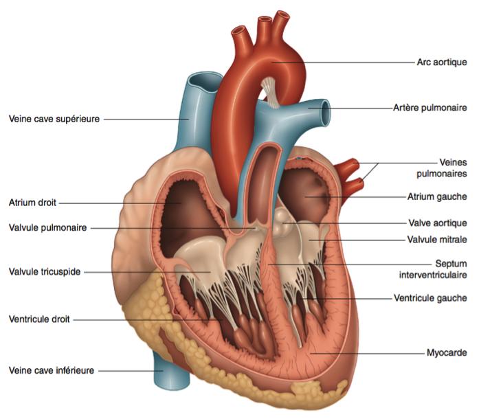 Quatre chambres composent le coeur
