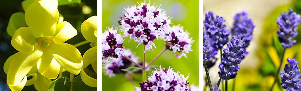Le stress est la résultante de nombreuses causes sur lesquelles ostéopathie et plantes ont des effets bénéfiques