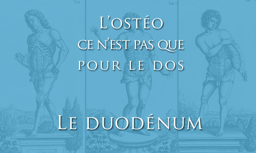 Le duodénum et la prise en charge ostéopathique